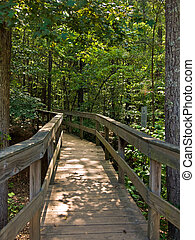 A wooden bridge leading into the forest
