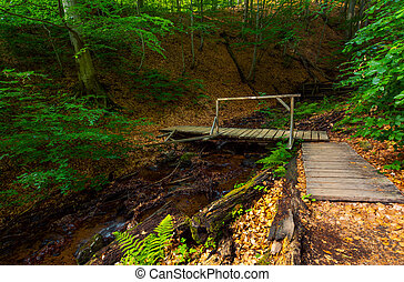 wooden bridge above the forest stream. lovely nature scenery...