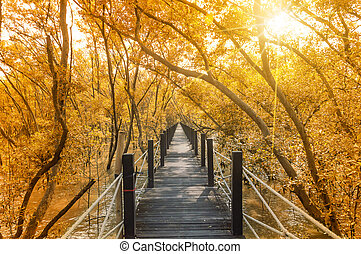 Wooden Bridge along the mangrove forest.