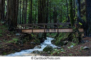 Wooden Bridge Crosses Creek in Redwoods Forest