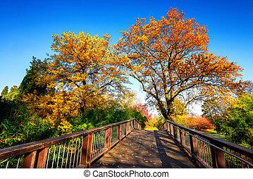 Wooden bridge in a colorful autumn scene