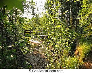 Wooden bridge in Alaska fores on the Granite Tors trail