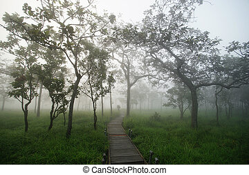 wooden bridge in forest with mist