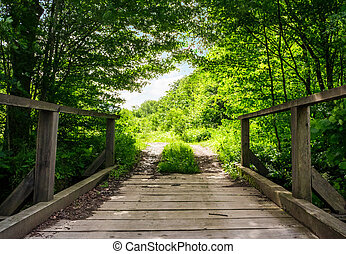 wooden bridge in green forest. lovely nature scenery in...