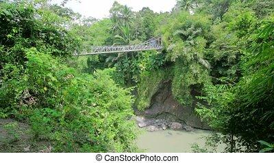 wooden bridge in jungle