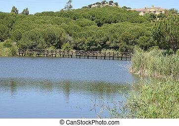 Wooden bridge in lake
