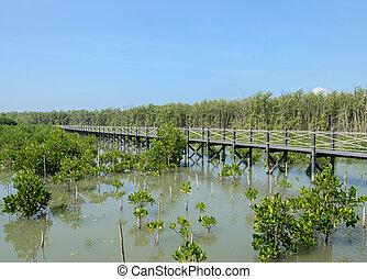 Wooden bridge in mangrove forest