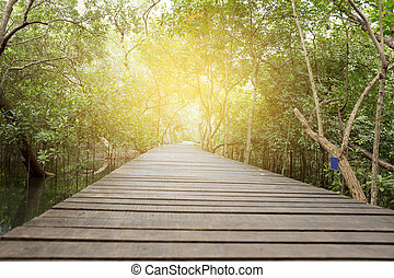 Wooden Bridge in Mangrove forest with sunlight
