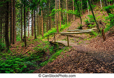 wooden bridge in pine forest - wooden bridge on the foot...