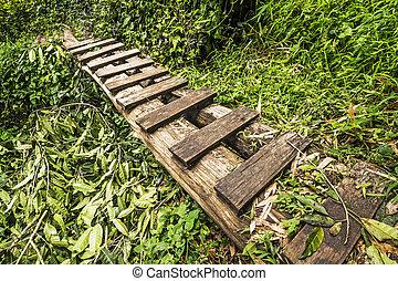 Wooden bridge in rain forest