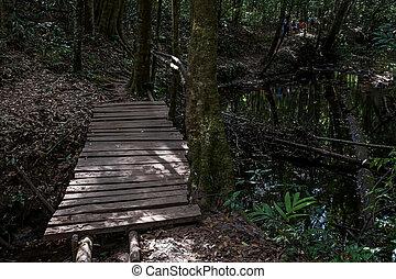 Wooden bridge in the deep forest.