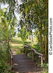 wooden bridge in the jungle
