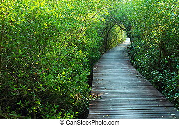Wooden bridge in the mangrove