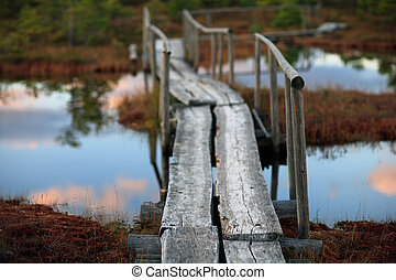 Wooden bridge in the swamp