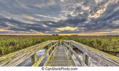Wooden bridge on Walking track