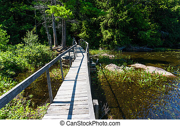 Wooden bridge over a swamp in the forest