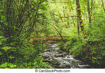 Wooden Bridge Over Creek in Lush Forest
