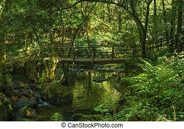 Wooden bridge over the Rio Mau in Cabreia's Park, Sever do Vouga, Aveiro, Portugal.