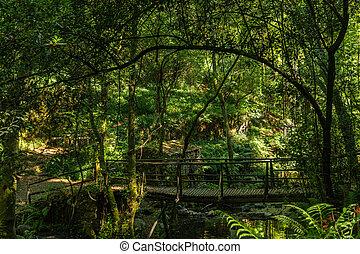 Wooden bridge over the Rio Mau in Cabreia's Park Sever do Vouga Aveiro Portugal.