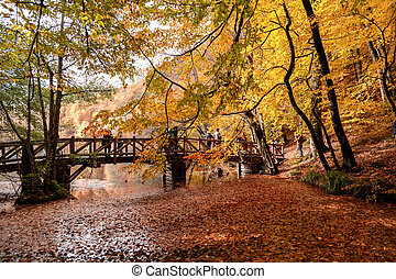 Wooden Bridge with Fallen Leaves over Lake