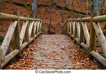 Wooden Bridge with Fallen Leaves