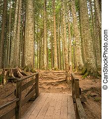wooden bridzs, út, erdő, reggel