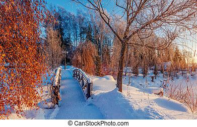 wooden bridzs, liget, tél, havas