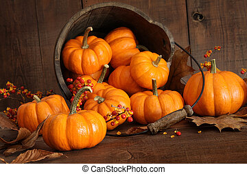 Wooden bucket filled with colorful tiny pumpkins