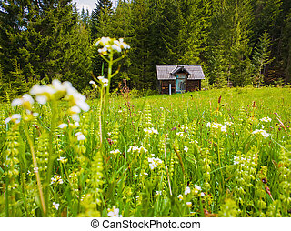 Wooden cabin on the blooming meadow surrounded by coniferous woods. Picturesque spring background of the Carpathians
