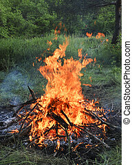 Wooden camp fire in the summer forest.