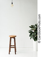 wooden chair, lamp and potted plant on white
