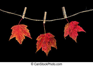wooden clothespins holding maple leaves