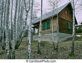 Wooden cottage in a birch forest