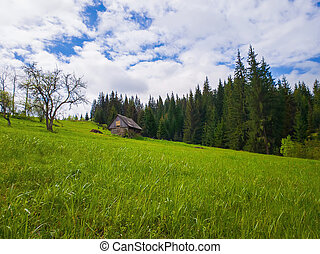 Wooden cottage in the mountains, sunny spring day with green grass meadow. Evergreen fir forest on the hill