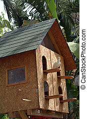 Wooden dovecote - One domestic white dove sit on wooden...