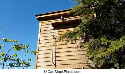 Wooden Dovecote With Pigeon In A City Park