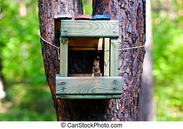 Wooden feeder for birds