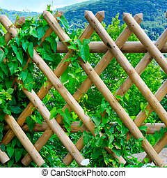 wooden fence and green plants