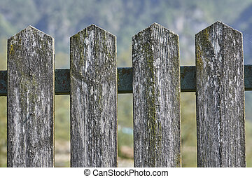 wooden fence in the backyard