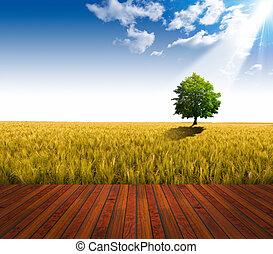 Wooden Floor and Wheat Field - Wooden floor over yellow...