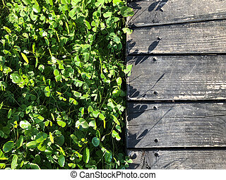 Wooden floor with green leaves background at outdoor garden