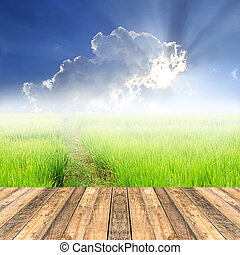 Wooden floor with green paddy rice in field and blue sky backgro