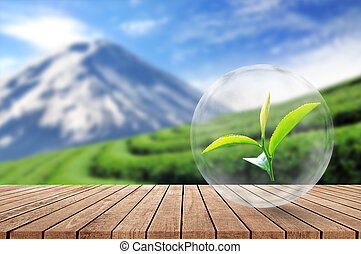 Wooden floor with organic tea leaf in the bubble on blurred beautiful landscape and tea plantation background.