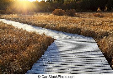 wooden footbridge across the wetland