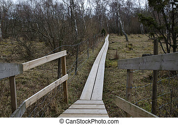 Wooden footpath in a nordic landscape