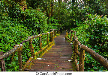 Wooden footpath nature trail at Doi Inthanon