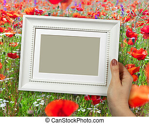 Wooden frame in woman hands on the background poppy field