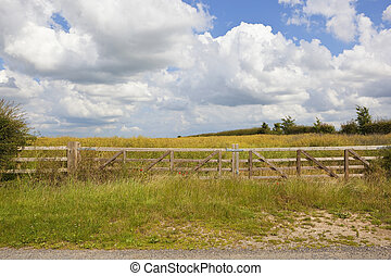 wooden gate and oilseed rape crop