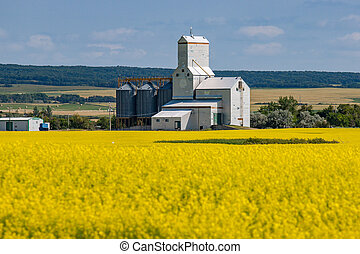 Grain Elevator Behind Bright Yellow Canola Field