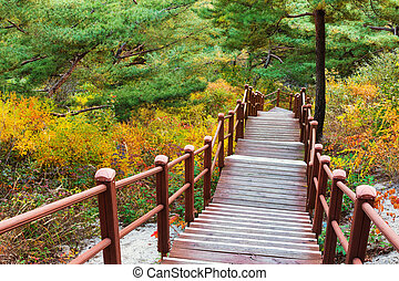 Wooden hiking path to the mountain